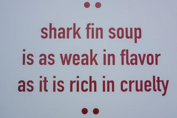 shark bangkok